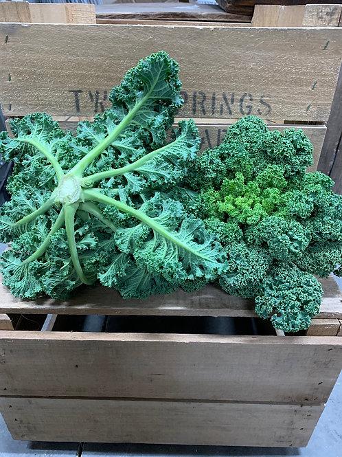 Kale: curly leaf (1 lb)
