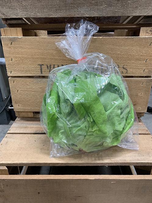 Lettuce: Green Buttercrunch