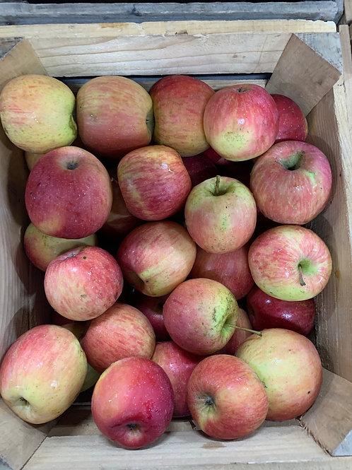 Apples: Sun  Fuji (1/2 bushel)