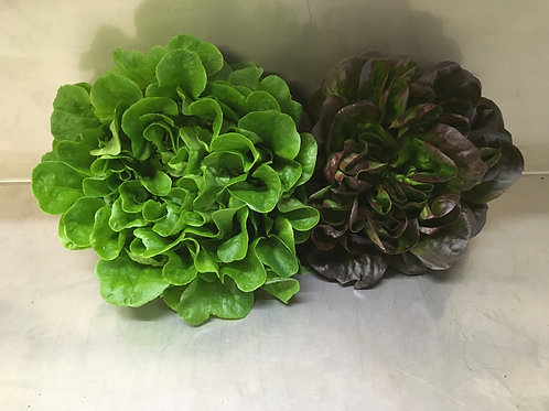 Lettuce: (two heads:  one green, one red)