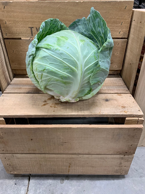 Cabbage: large head (about 5 lbs)