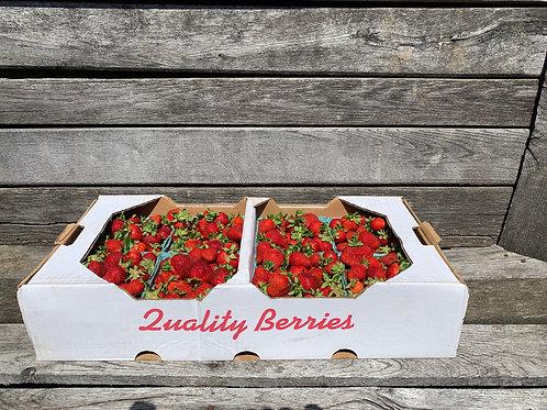 Strawberries: Flat of 8 quarts