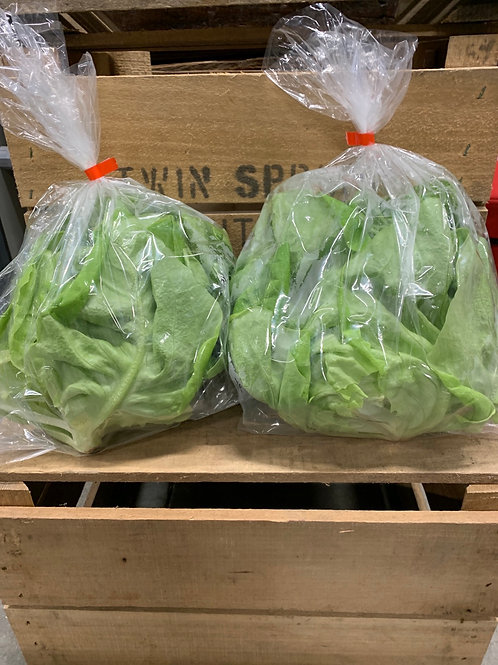 Lettuce:  Green Buttercrunch ( 2 heads sale)