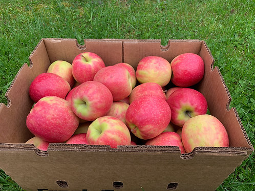 Apples: Pink Lady (1/2 bushel)