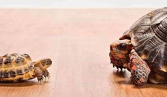 tortoises_edited.jpg