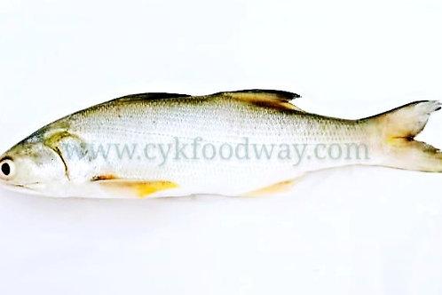 Fish Threadfin / Senangin 午鱼/马友鱼 ( Kg )