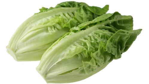 Romance Lettuce / Yau Mak 香旦 / 油麦