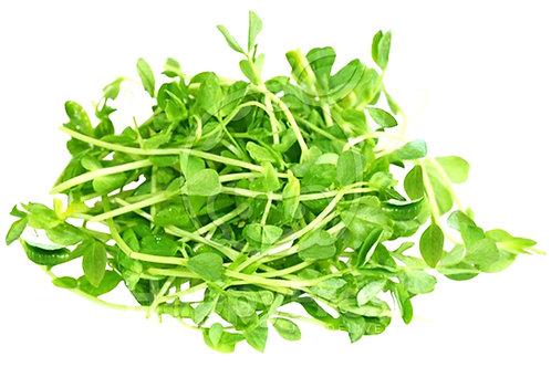 Pea Sprout / Tou Miow 豆苗 ( 300g ± )