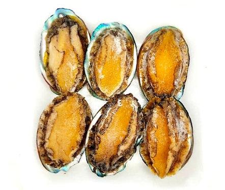 Abalone With Shell ( 6 pcs )