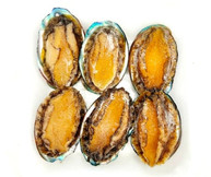 Abalone With Shell 鲜鲍鱼 ( 6 pcs )