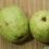 Thumbnail: Guava / Lohan ( Pcs )