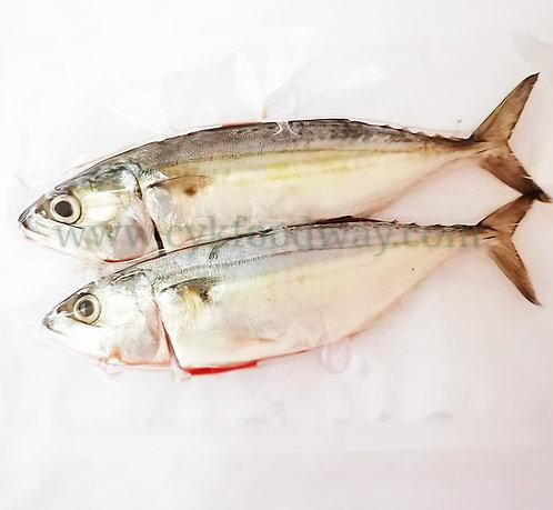 Indian Mackerel / Kambong Local 印度鲭鱼/甘望鱼 ( 2 pcs / 300g ± )