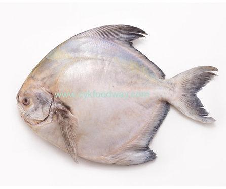 Fish Chinese Pomfret 斗昌鱼 ( 2-3 pcs / 380g ± )