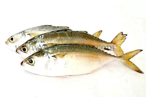 Indian Mackerel / Kambong Local 印度鲭鱼/甘望鱼 ( 1kg ± )