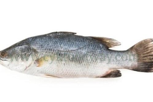Fish Siakap / Seabass - 金目鲈  700-800g ( Kg )