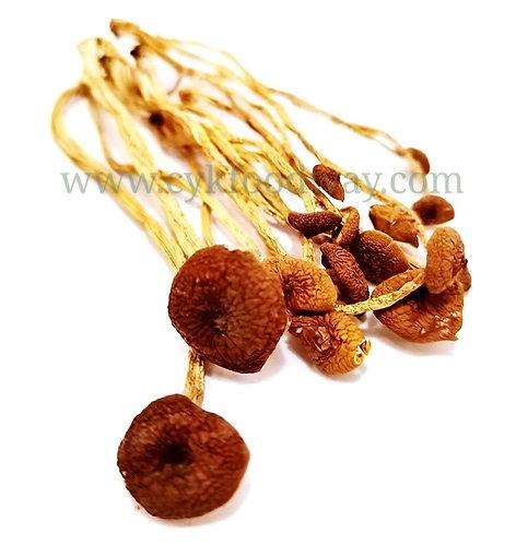 Tea Tree Mushroom 茶树菇 ( 50 g )