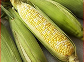 Corn On The Cob Pearl ( 3 pcs )