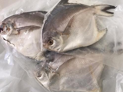 White Pomfret Fish 白昌鱼 - above 300g (kg)