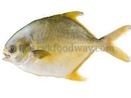 Fish Pomfret Golden 银昌鱼 - Clean ( 300 g ±)