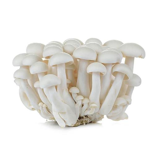 Shimeiji White Mushroom 白玉菇 ( pack )
