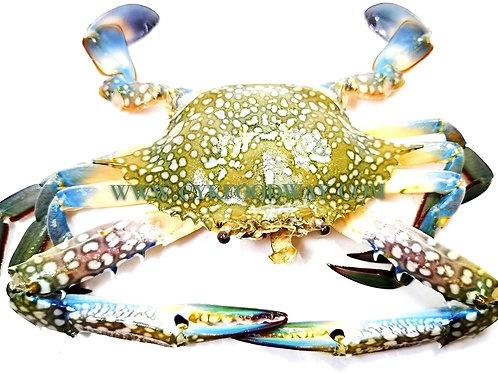 Fresh Flower Crab 花蟹 ( 5 - 6 Pcs / 1 kg ± )