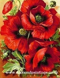 Red Poppies 20*25