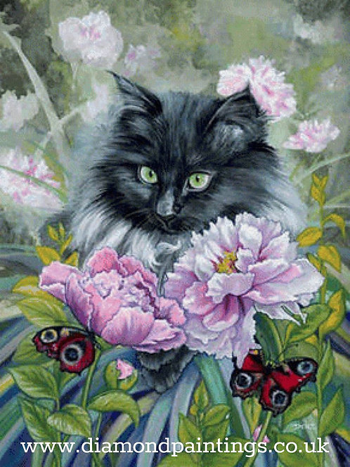 Black Cat, Butterflies and Pink Flowers  30*40