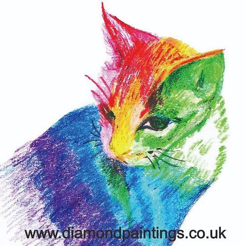 Colourful Cat  20*20