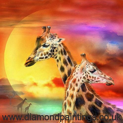 Giraffes 30*30