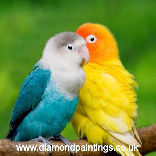 Parrots  20*20