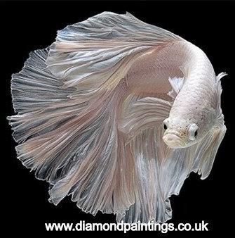 White Fish15*15cm