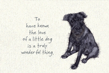 The Love Of A Dog - Pet Loss
