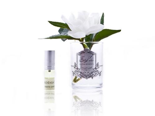 Single Gardenia in vase - Cote Noire