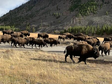 Road Trip to Yellowstone