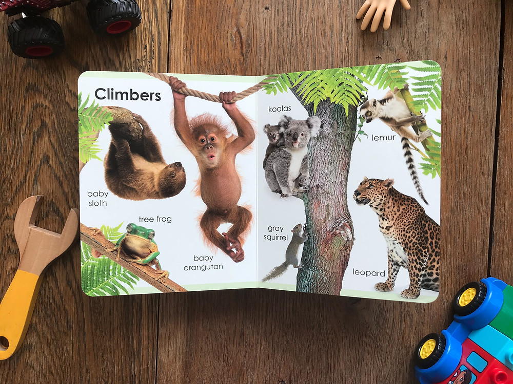 my first animals, board, book