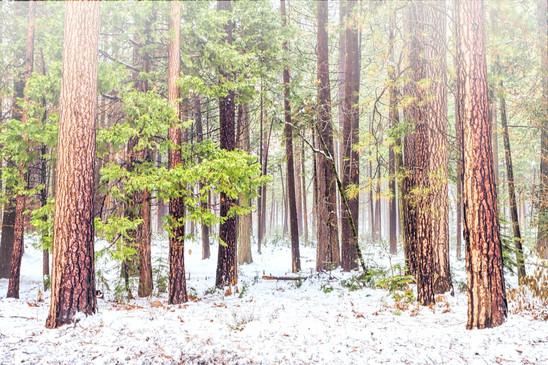 Yosemite Park Forest