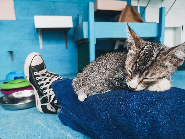 kitty on lap in adoption area.jpg