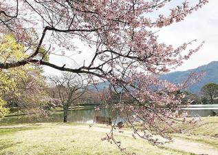 Osawa-no Ike - étang aux couleurs du printemps