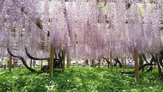 Fuji de Byodo-in est un lieu célèbre mondialement pour la purification du paradis