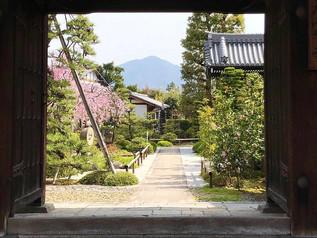 Les cerisiers de Ten Neiji