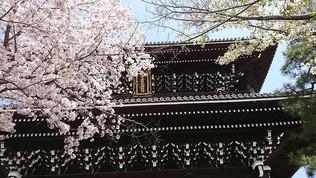 Les portes et les fleurs de cerisier du temple Komyo-ji