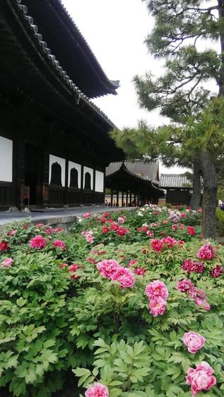 Kenninji Temple Bouton de Fleur
