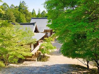 Feuilles d'érable vertes fraîches au temple Jingo-ji