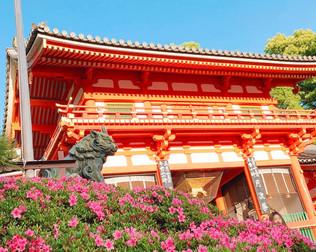 Azalées à la porte ouest du sanctuaire de Yasaka