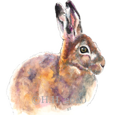 Sunlit Hare