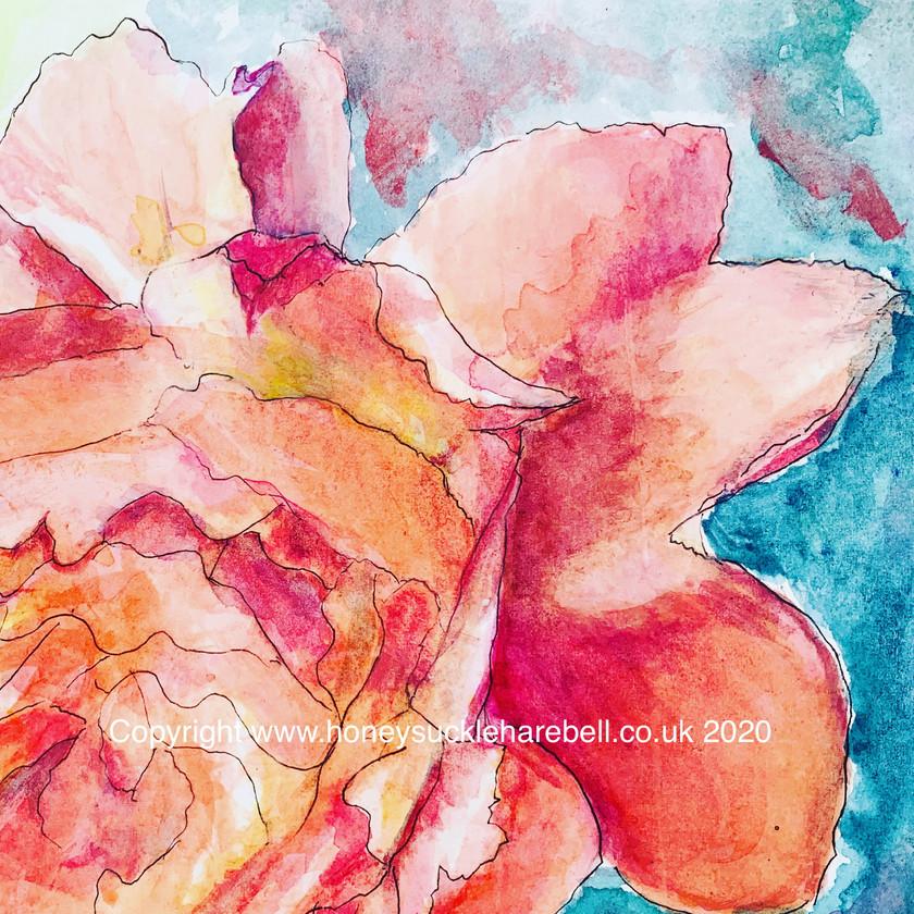 Peach of a Rose