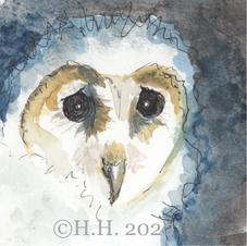 The Barn Owlet
