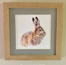 'Sunlit Hare'