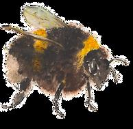 The Bees Knees©honeysuckleharebell2020