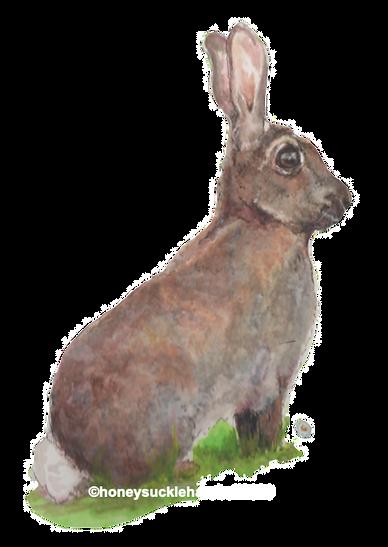 Bunny on a Daisy